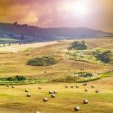 Strohballen nach Ernte in Sizilien Lizenzfreies Stockbild