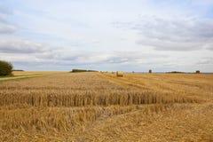 Strohballen und ungeschnittener Weizen Lizenzfreie Stockbilder