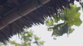 Strohdach des Sommerbungalows und der grünen Blätter während Regen im grauen Himmelhintergrund Tropischer Regen, der auf Bungalow stock footage