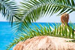 Strohdachbungalows auf einem Hintergrund Stockbild