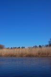 Strohflußufer und blauer Himmel des freien Raumes Lizenzfreie Stockfotos