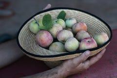 Strohhut mit roten saftigen Äpfeln Stockfotos