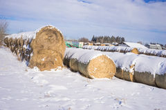 Strohkautionen im Winter Stockbild