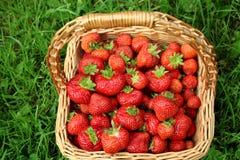 Strohkorb mit Erdbeeren Lizenzfreies Stockfoto