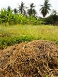 Strohmiete in der Wiese mit Bäumen Lizenzfreies Stockfoto