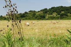 Strohrundballen auf einem Gebiet während der Sommerernte und eines Storchs in der Landschaft Lizenzfreie Stockbilder