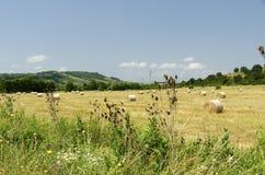 Strohrundballen auf einem Gebiet während des Sommers ernten Stockfoto