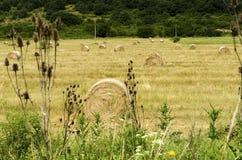 Strohrundballen auf einem Gebiet während des Sommers ernten in der Landschaft Lizenzfreie Stockfotografie