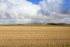 Strohstoppelfeld und drastischer Himmel Lizenzfreie Stockfotografie