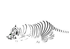 Stroken van tijger Stock Foto's