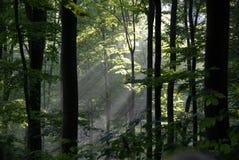 Stroken van zonlicht Stock Foto's