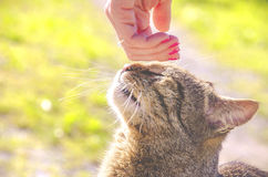 Stroking the cat head female hand.  Royalty Free Stock Images