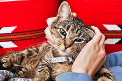 Stroking a cat Royalty Free Stock Photography