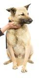 Stroking a dog Royalty Free Stock Photos