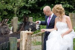 Stroking the donkey Royalty Free Stock Photos