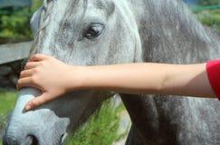Stroking a horses head closeup. Royalty Free Stock Photos