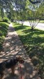 stroll солнечный Стоковые Изображения RF