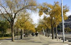 Stroll in Autumn Royalty Free Stock Photos