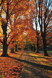 Stroll d'automne Photo stock