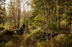 Free Stroll In The Woods Royalty Free Stock Images - 27124889