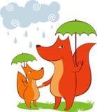Stroll under the rain. Fox-mum and its baby walking in the rain Stock Image