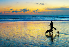 Strolling with the dogs. Woman with two dogs walking on a beach at sunset. Bali island Royalty Free Stock Photos