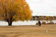 Strolling through Fall II. A couple takes a relaxing stroll around the lake during fall's brilliance which is reflected in the calm lake Stock Photos