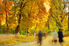 Strolling in a park Stock Photography