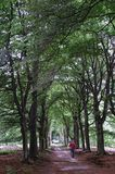 Strolling on tree-lined path Royalty Free Stock Image