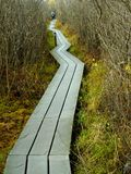 Strolling on the Volo Bog Boardwalk in the Fall. Hiker exploring the Lake County Volo Bog nature reserve. A long wooden boardwalk zig-zags through the bog in royalty free stock photos