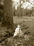 strom Stockfotografie