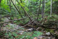 Strom in den weißen Bergen von New Hampshire Lizenzfreies Stockfoto