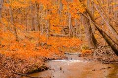 Strom, der durch einen Herbstwald sich schlängelt Lizenzfreies Stockfoto