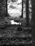 Strom, der durch Kielder-Wald läuft Lizenzfreie Stockfotografie