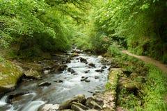 Strom in der englischen Landschaft Stockfoto