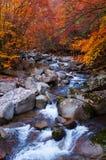 Strom, der goldenen Fallwald acrossing ist Lizenzfreie Stockfotografie