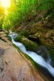 Strom des flüssigen Wassers im Gebirgswald Stockbilder