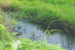 Strom des Wassers für die Landwirtschaft Stockfotografie