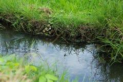 Strom des Wassers für die Landwirtschaft Stockfoto