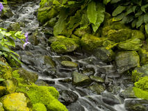 Strom des Wassers mit purpurroten Blumen in der Frontseite lizenzfreies stockbild
