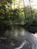 Strom durch einen Nord-Wisconsin-Wald Stockfotografie