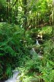 Strom in einem Regenwald stockbilder
