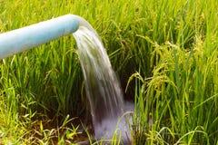 Strom eingezogene Reissämlinge Lizenzfreie Stockfotos