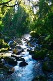Strom in Hollyford, Nationalpark Fiordland stockbild