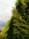 Strom i ljus arkivbilder