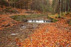 Strom im Herbstholz Stockfotos