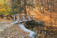 Strom im Herbstwald Lizenzfreies Stockfoto