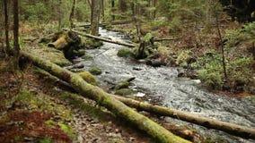 Strom im nördlichen Wald stock footage