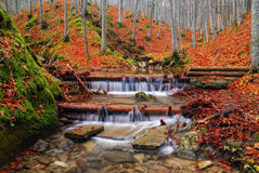 Strom im Park im Herbst Stockfoto