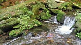Strom im Wald stock video footage